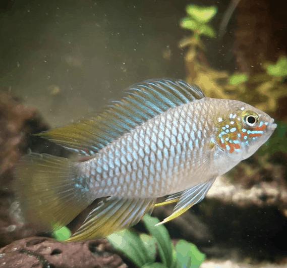 267: Die Filterung im Aquarium - 8 Tipps zur Auswahl, Pflege und Optimierung (Dukes Aquaristikexperimente) 6