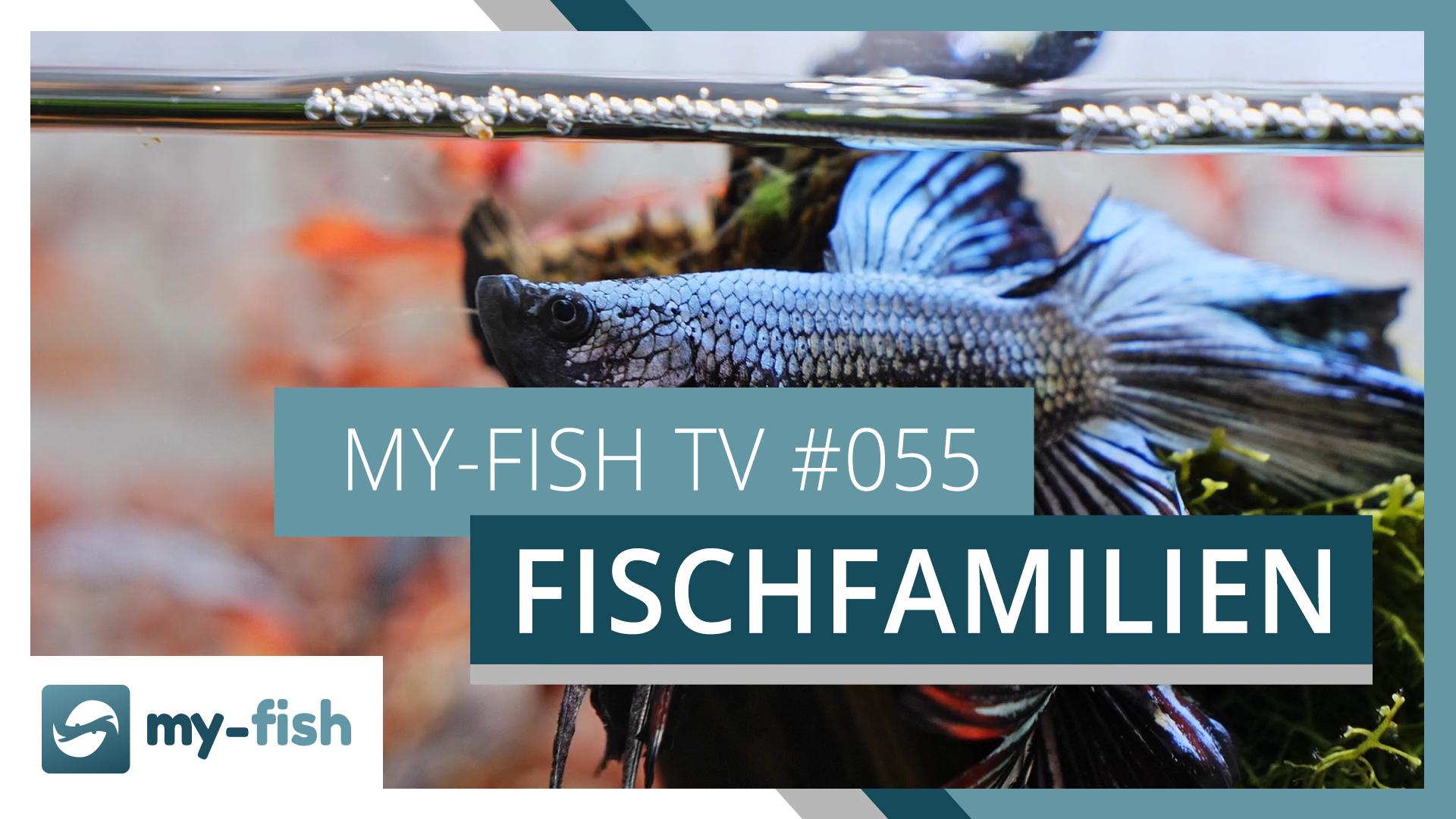 my-fish TV: Diese verschiedenen Fischgruppen kannst du im Aquarium halten