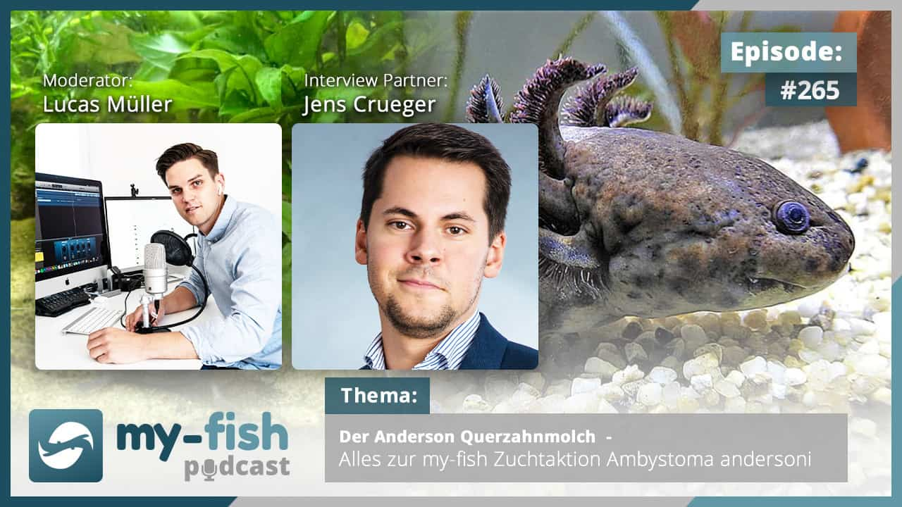 265: Der Anderson Querzahnmolch - Alles zur my-fish Zuchtaktion Ambystoma andersoni (Jens Crueger) 1