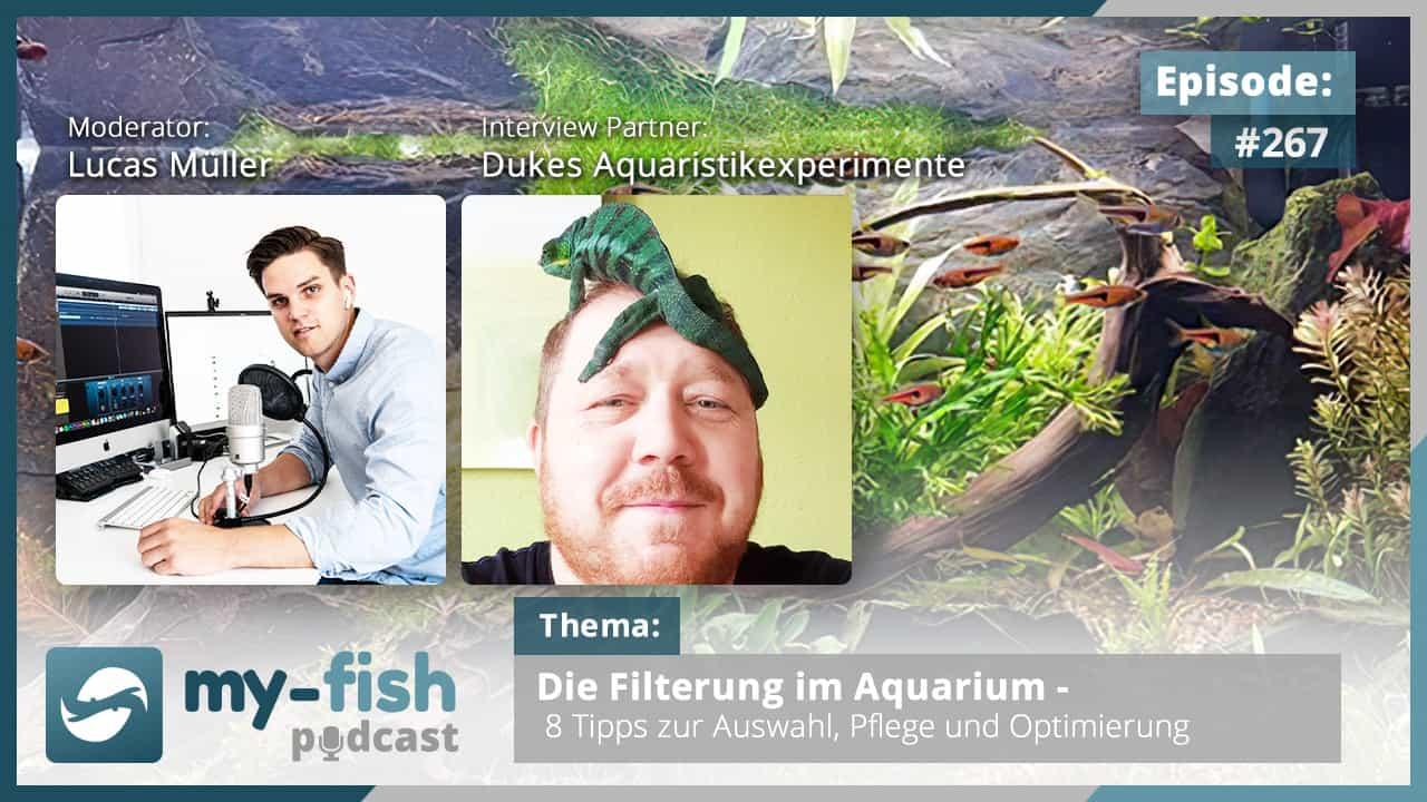 274: Der my-fish Podcast Jahresrückblick 2020 - 45 Episoden mit interessanten Personen aus der Aquaristik 9