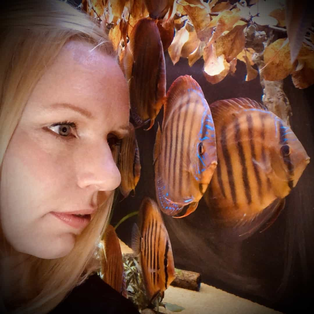266: Die DiskusMummy und der König der Aquarienfische - Diskushaltung aus Leidenschaft (Isabelle Geil) 3