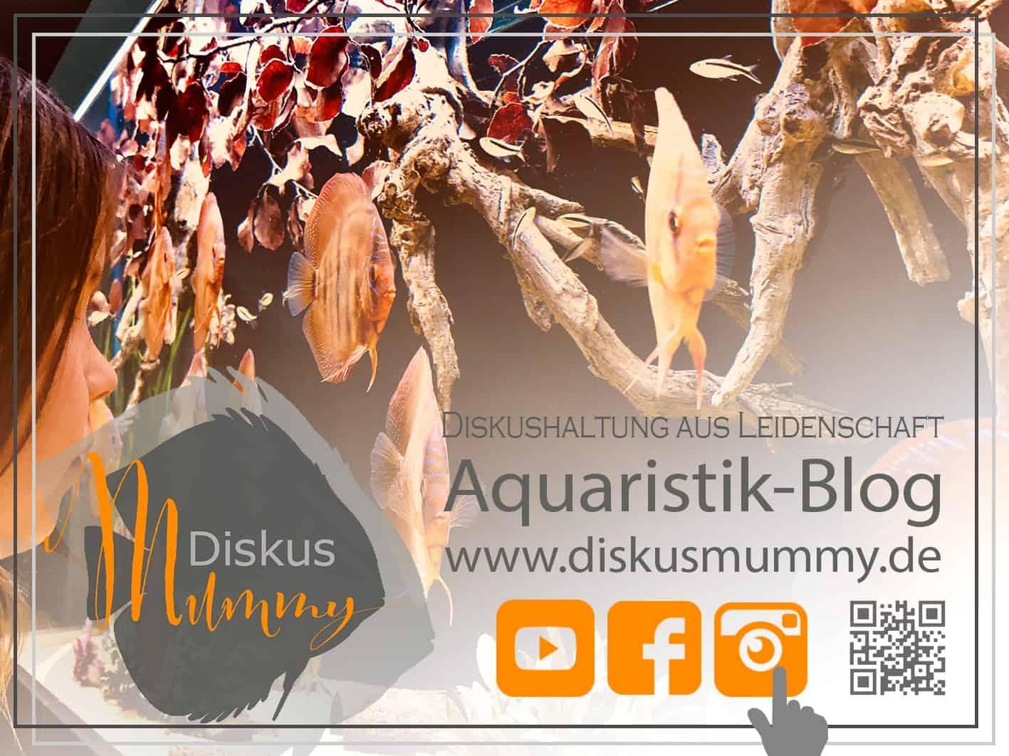 266: Die DiskusMummy und der König der Aquarienfische - Diskushaltung aus Leidenschaft (Isabelle Geil) 9