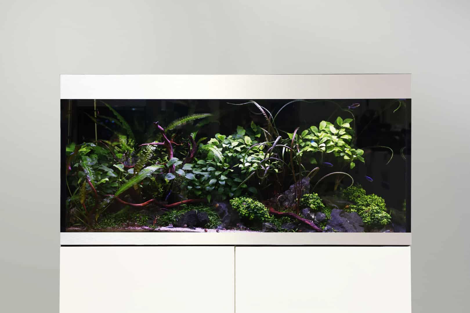 270: Die Ernährung von Zierfischen - Futter für die Aquarienbewohner (Thorsten Muck & Joachim Wilmink) 2