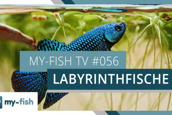 my-fish TV 056