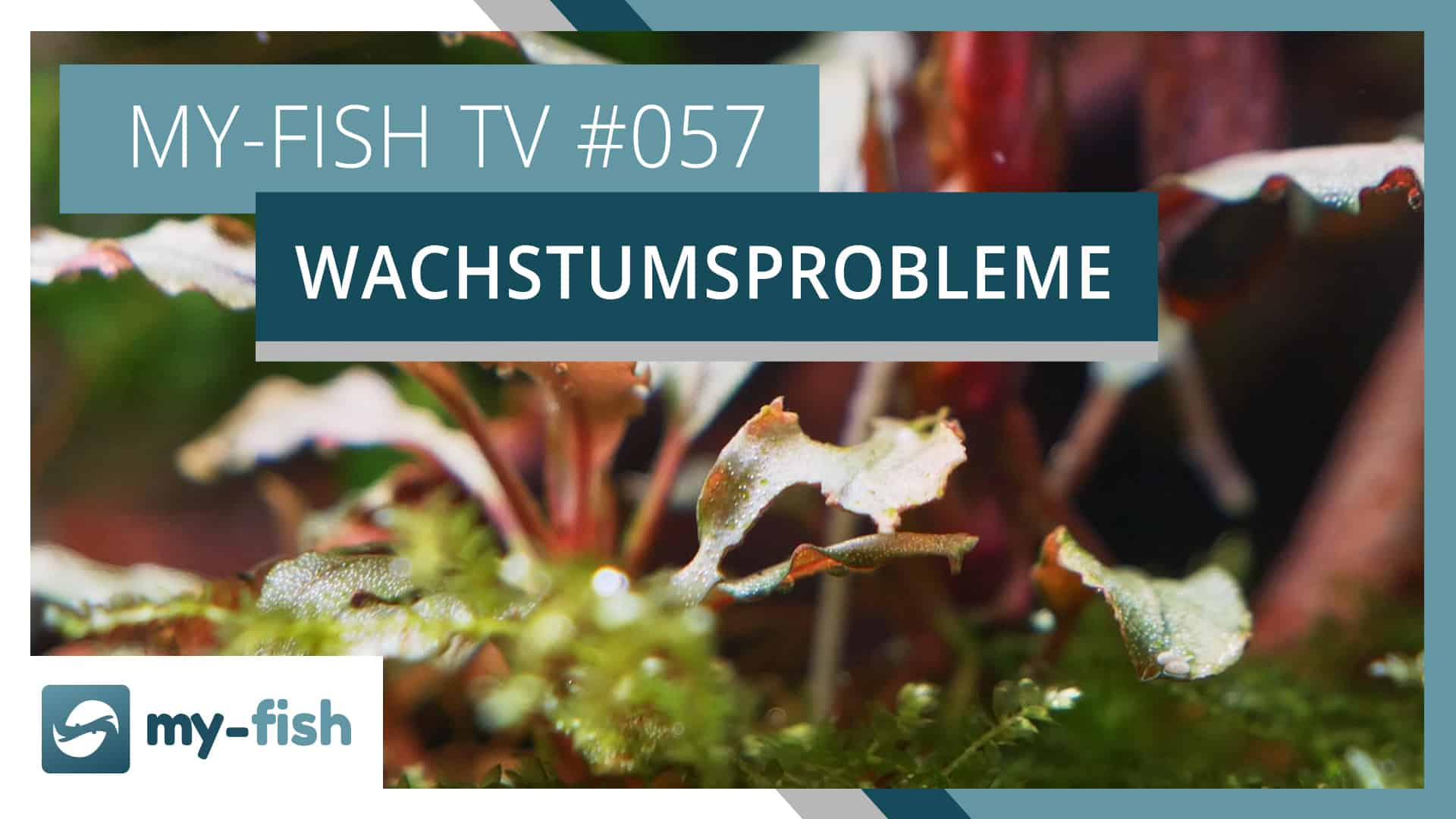 my-fish TV 057