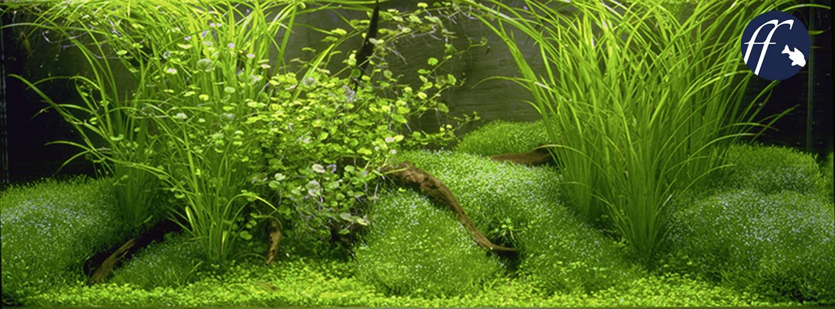 Franky Friday: Bodengrund im Aquarium - Welcher ist richtig?