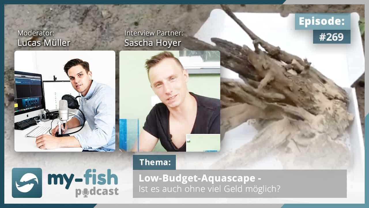 Podcast Episode #269:Low-Budget-Aquascape - Ist es auch ohne viel Geld möglich? (Sascha Hoyer) 1