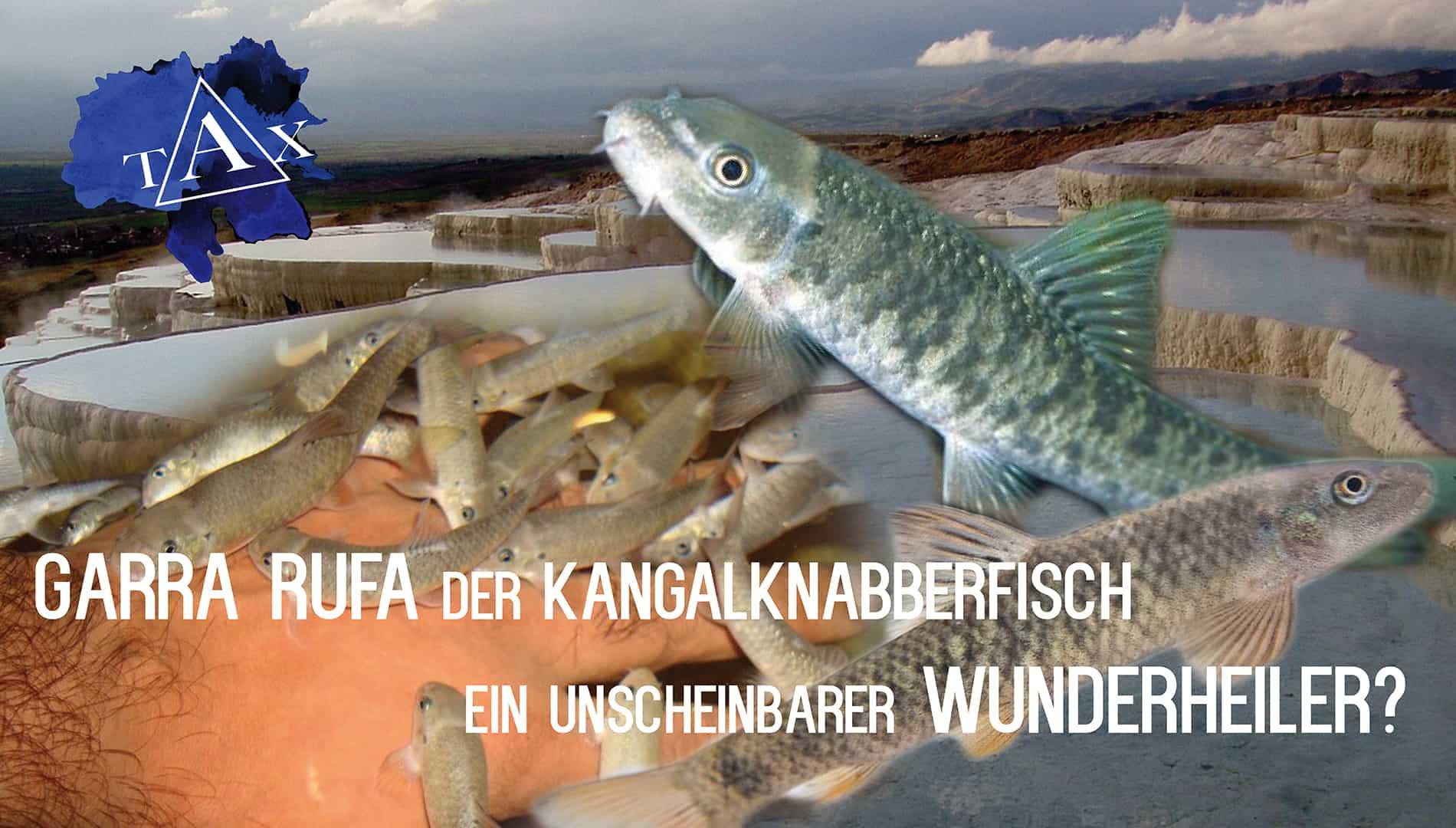 Tobis Aquaristikexzesse Video Tipp: Garra rufa Der Kangalknabberfisch