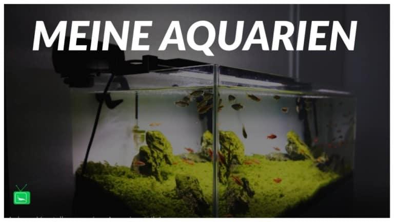 GarnelenTv – Video Tipp:  Lucas stellt seine Aquarien vor