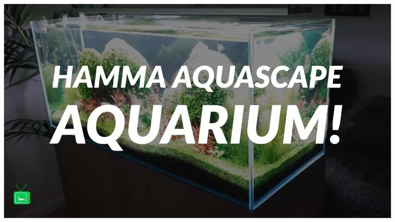 GarnelenTv Video Tipp: Atemberaubendes Aquascape Aquarium