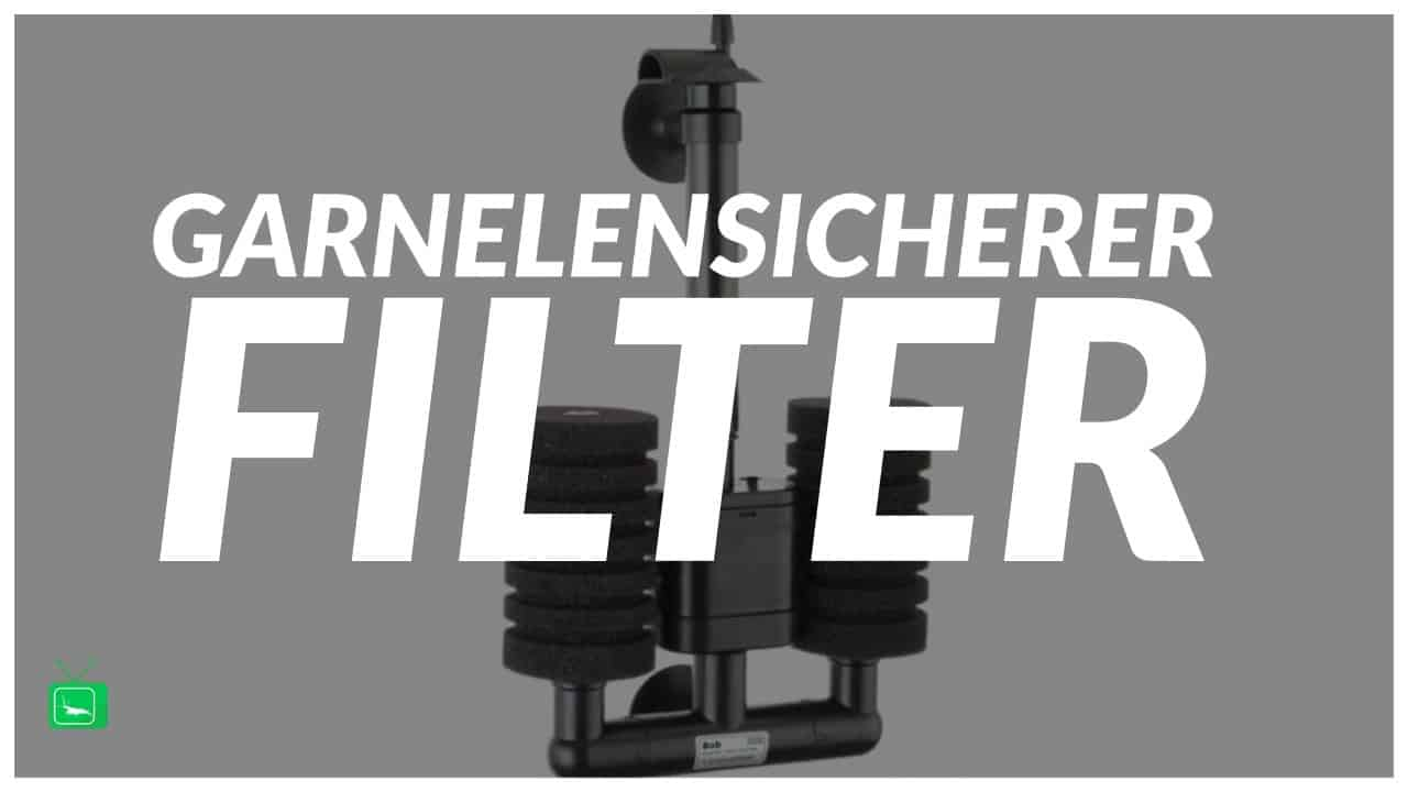 GarnelenTv Video Tipp:  Garnelensicherer Filter