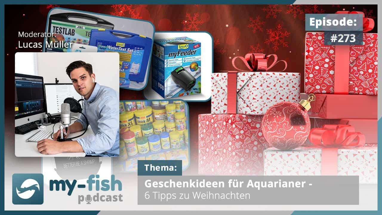 273: Geschenkideen für Aquarianer - 6 Tipps zu Weihnachten 1