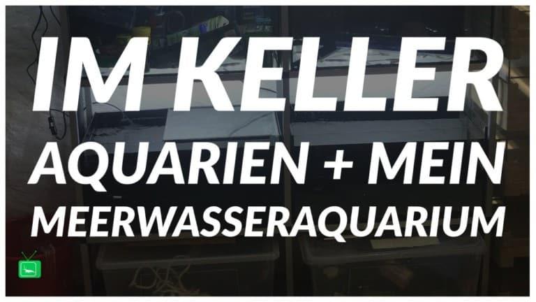 GarnelenTv Video Tipp: Meerwasseraquarium und Kelleranlage Teil 2