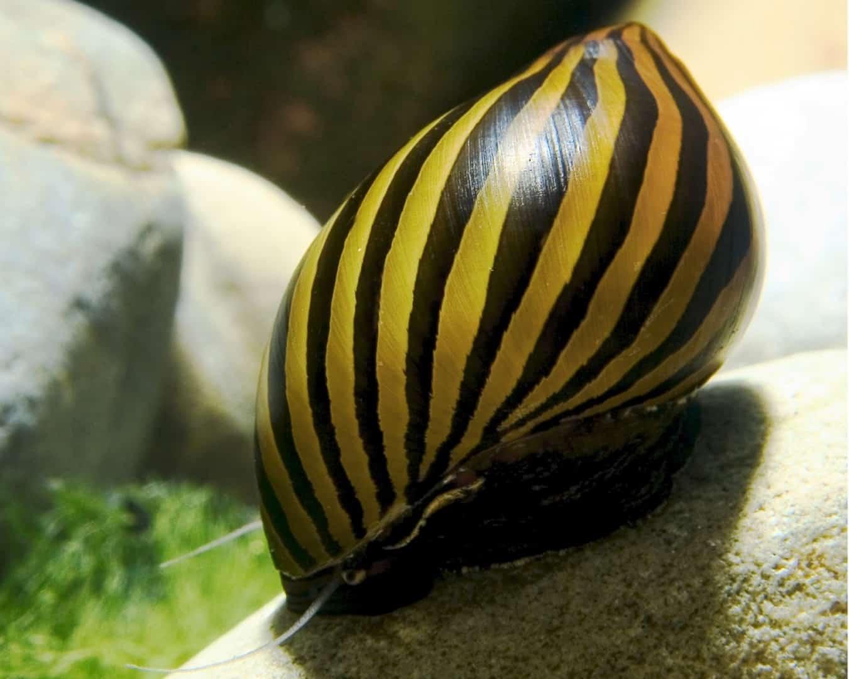 275: Trends in der Wirbellosen-Szene - Was gibt es Neues bei Garnelen, Krebsen und Schnecken? (Farschad Farhadi) 2