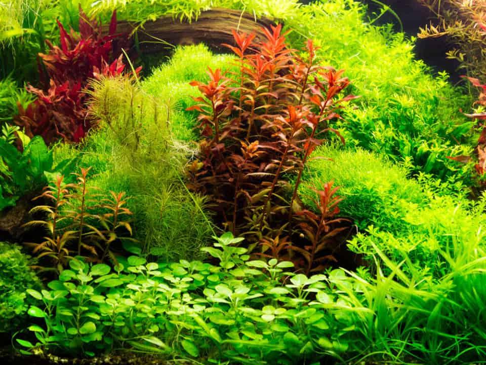 7 Tipps für das Einsetzen von Pflanzen ins Aquarium - so wachsen Aquarienpflanzen sicher an 4