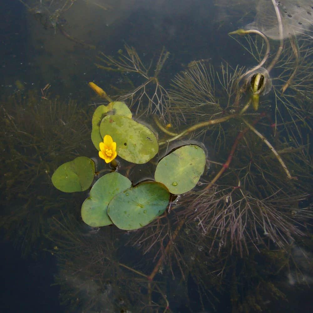 279: Erste Hilfe für Wasserpflanzen - Maßnahmen bei Problemen mit dem Wachstum (Maike Wilstermann-Hildebrand) 3