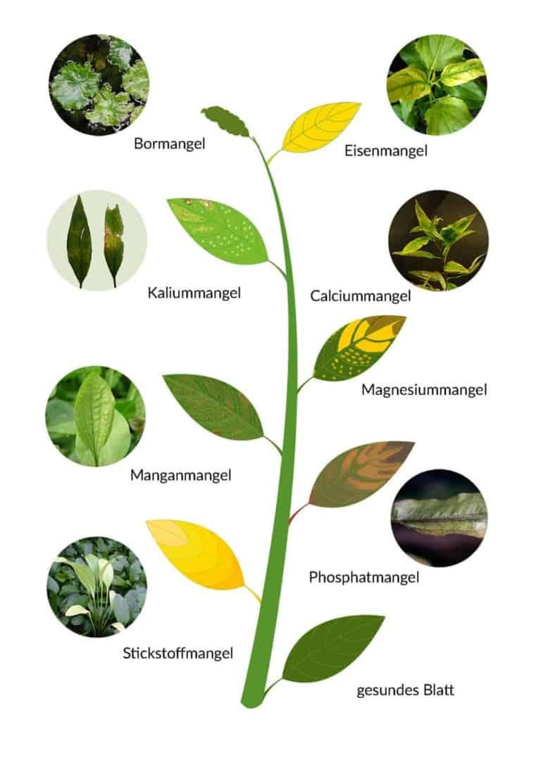 279: Erste Hilfe für Wasserpflanzen - Maßnahmen bei Problemen mit dem Wachstum (Maike Wilstermann-Hildebrand) 7