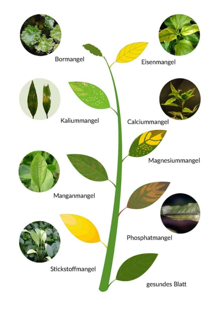 278: Aquarienpflanzen ganz einfach erklärt - Grundlagen und Arten zum Erfolg (Maike Wilstermann-Hildebrand) 2