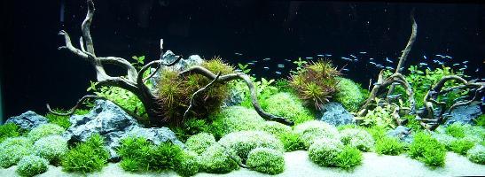 279: Erste Hilfe für Wasserpflanzen - Maßnahmen bei Problemen mit dem Wachstum (Maike Wilstermann-Hildebrand) 8