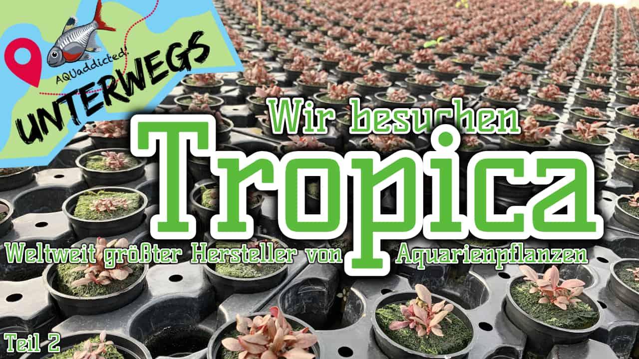 AQUaddicted! - Video Tipp: Vom Samen zur Wasserpflanze - Zu Besuch bei Tropica 2