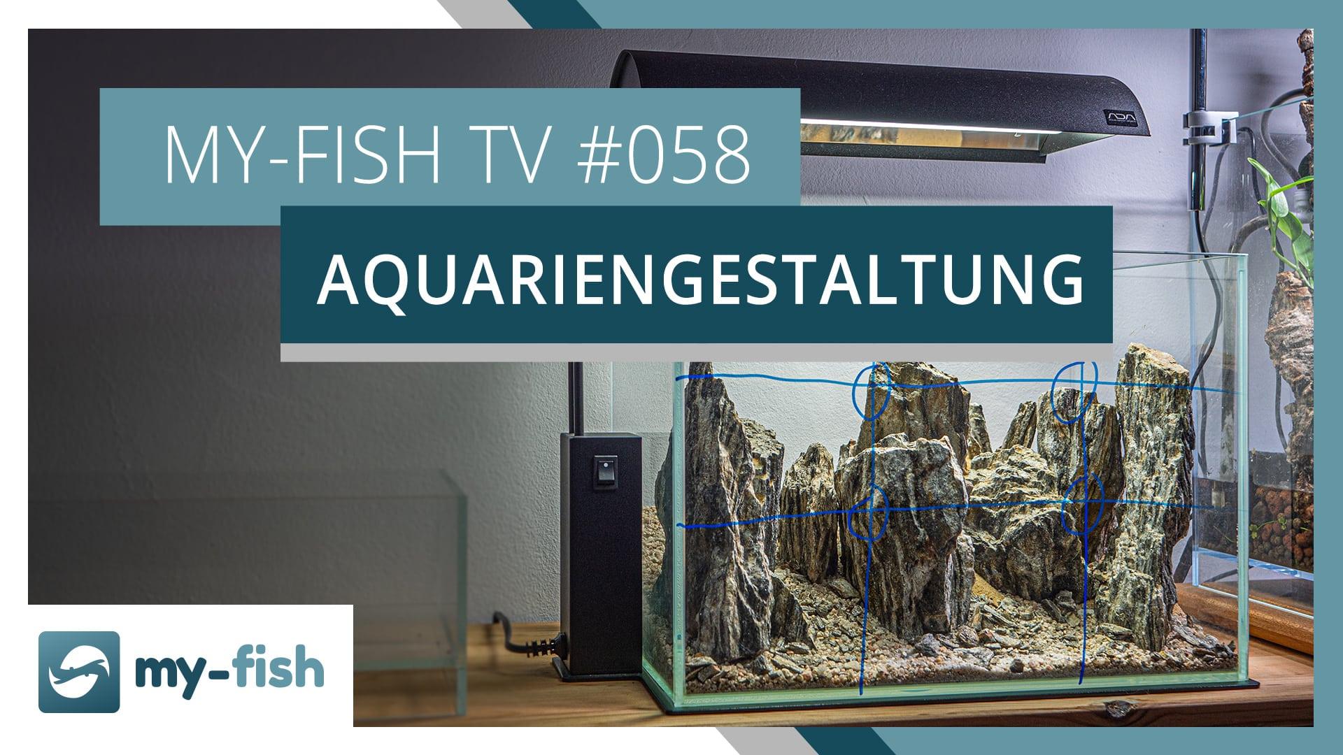 my-fish TV: Aquarien ansprechend gestalten mit diesen Grundregeln