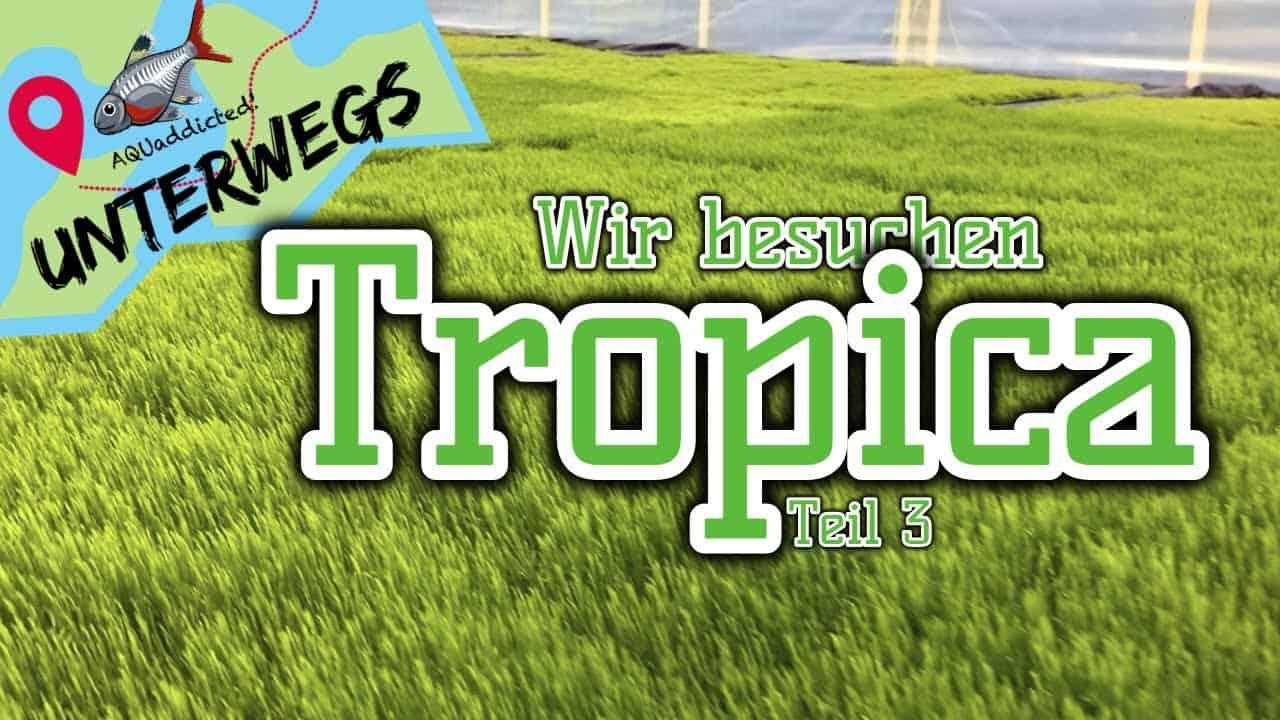 AQUaddicted! - Video Tipp: Ein Zelt voller Moose - Zu Besuch bei Tropica 3