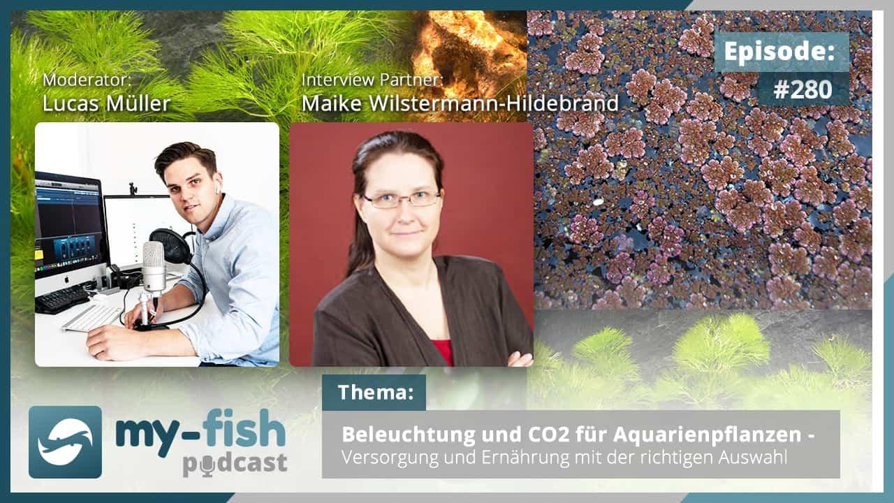 Podcast Episode #280: Beleuchtung und CO2 für Aquarienpflanzen – Versorgung und Ernährung mit der richtigen Auswahl (Maike Wilstermann-Hildebrand)