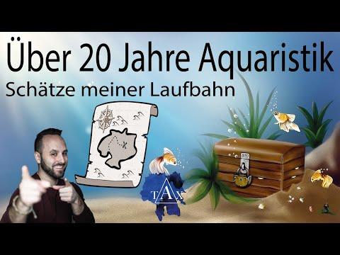 Tobis Aquaristikexzesse Video Tipp: Schatzsuche nach 20 Jahren Aquaristik