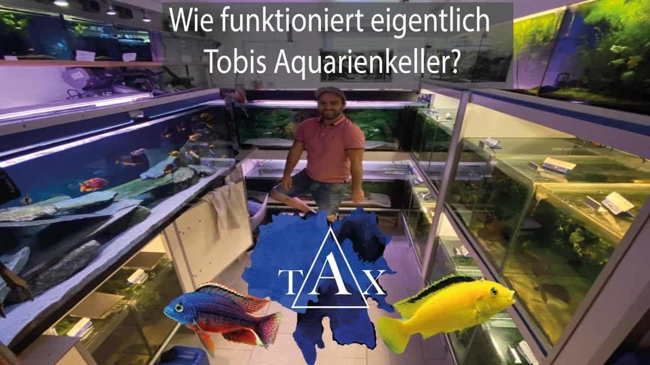 Tobis Aquaristikexzesse Video Tipp: Wie funktioniert eigentlich mein Aquarienkeller?