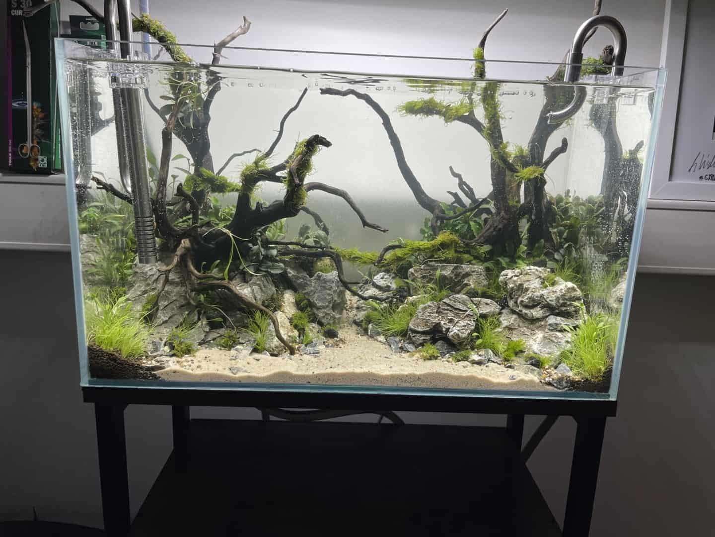 287: Live-Streaming in der Aquaristik - Gemeinsam ein Aquarium einrichten (Nature eScape & GarnelenTv) 16