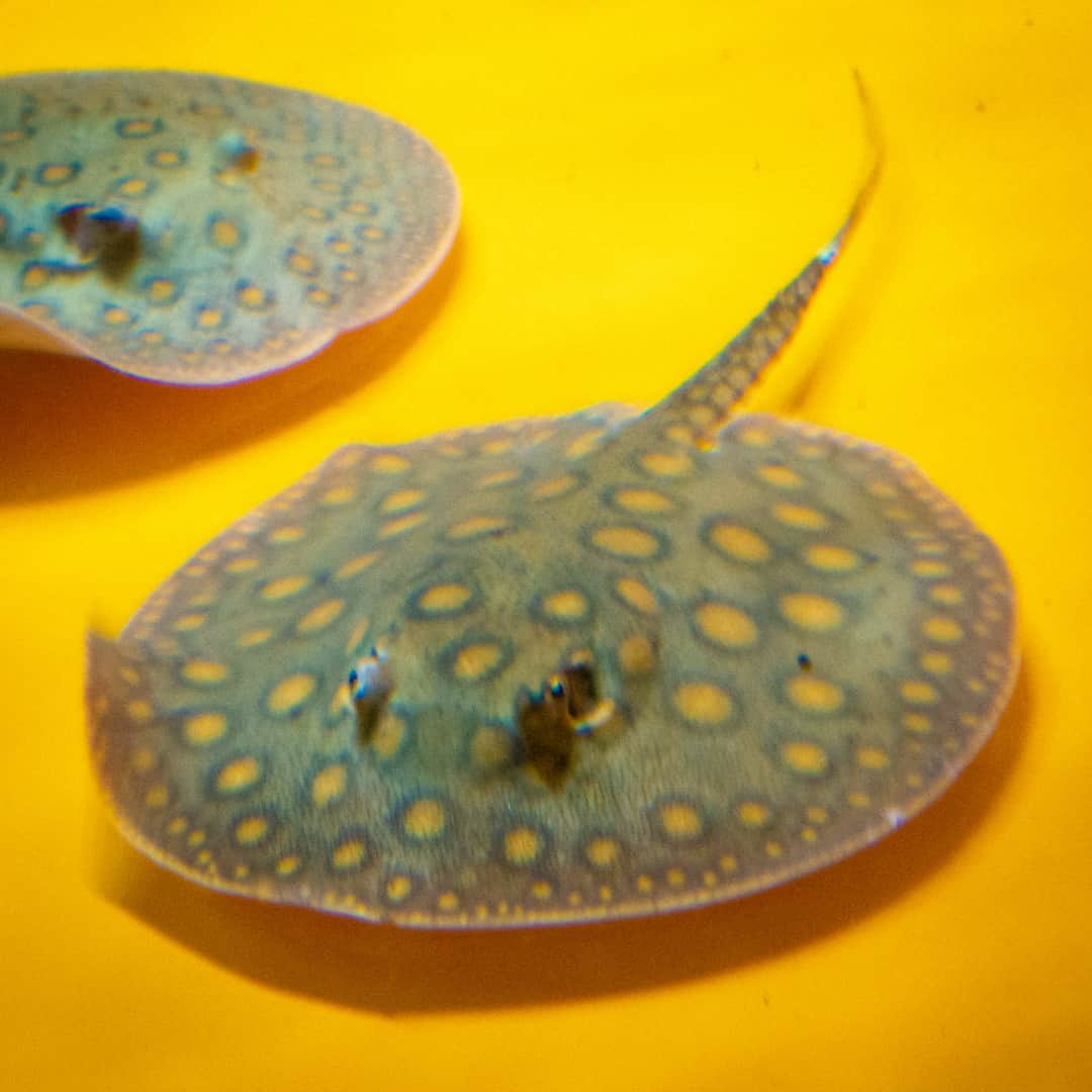 285: Wunderwelt Amazonas Aquaristik - Wildfänge aus Südamerika (Pascal Huy) 15