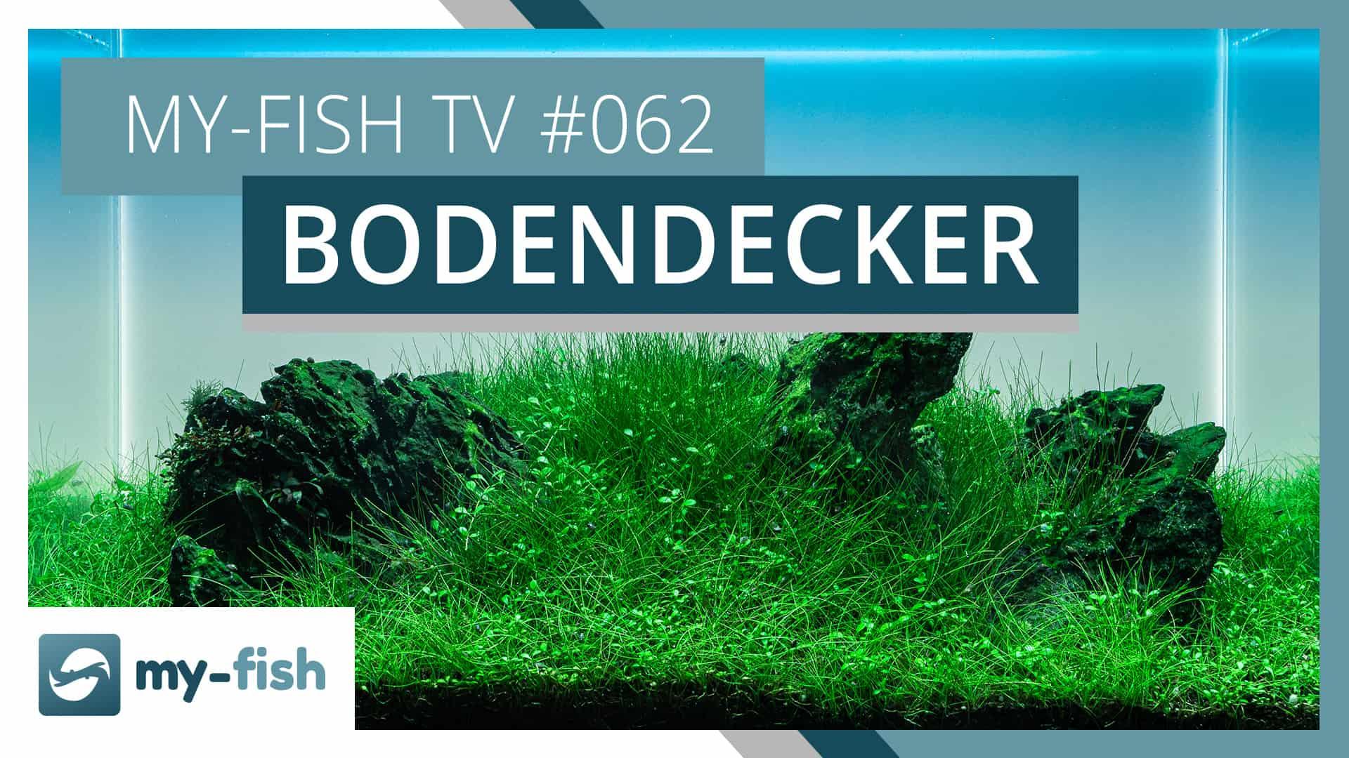 my-fish TV: Vordergrundpflanzen & Bodendecker im Aquarium halten