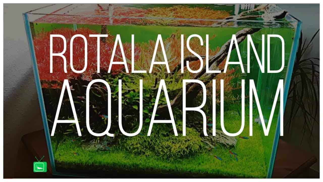 GarnelenTV Video Tipp: Rotala Island Aquarium