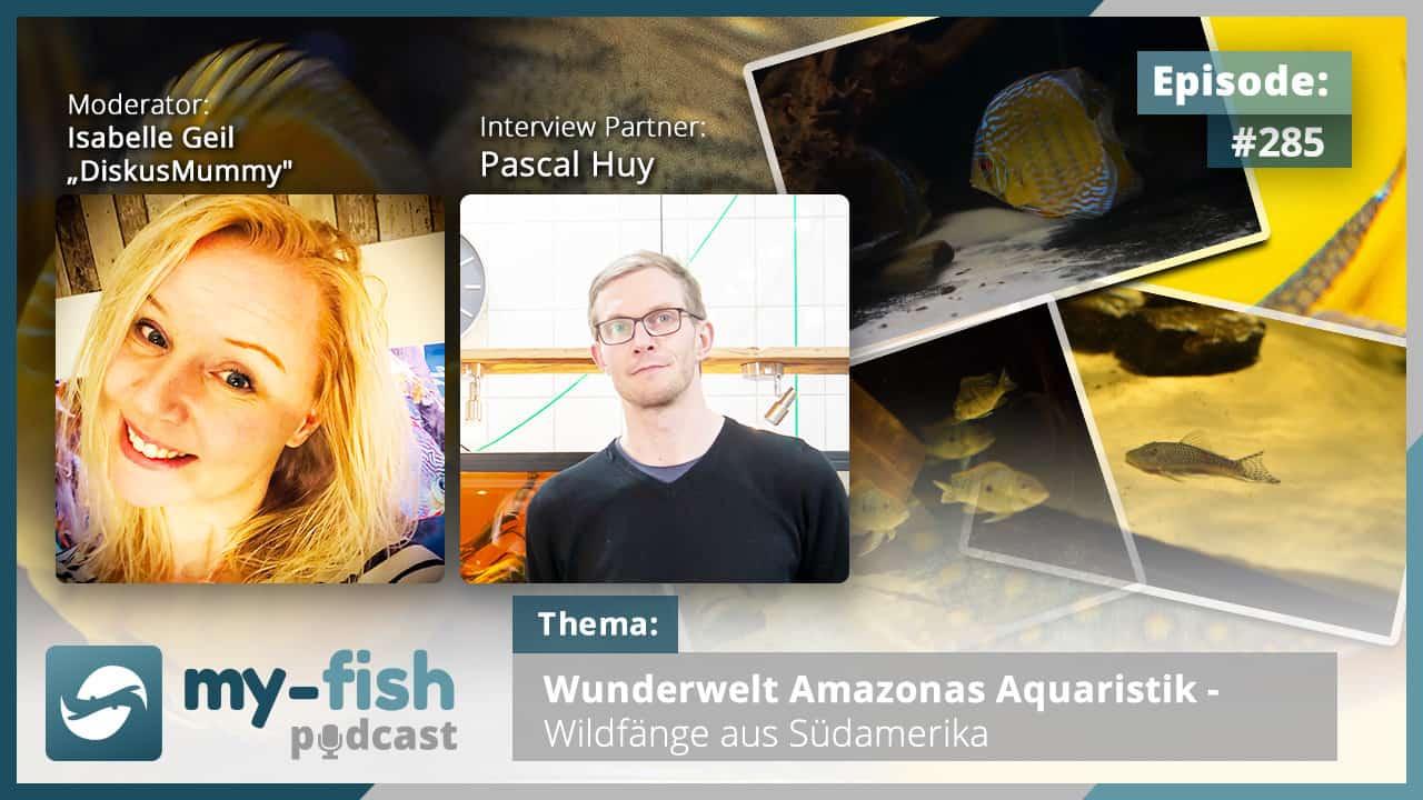 285: Wunderwelt Amazonas Aquaristik - Wildfänge aus Südamerika (Pascal Huy) 1