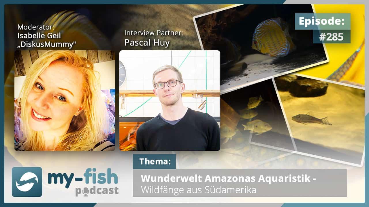 Podcast Episode #285: Wunderwelt Amazonas Aquaristik - Wildfänge aus Südamerika (Pascal Huy)
