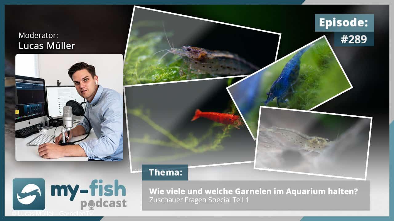 Podcast Episode #289: Wie viele und welche Garnelen im Aquarium halten? Zuschauer-Fragen-Special Teil 1 1
