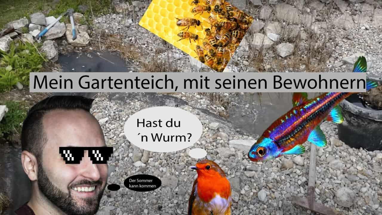 Tobis Aquaristikexzesse Video Tipp: Gartenteich - Alles muss raus!