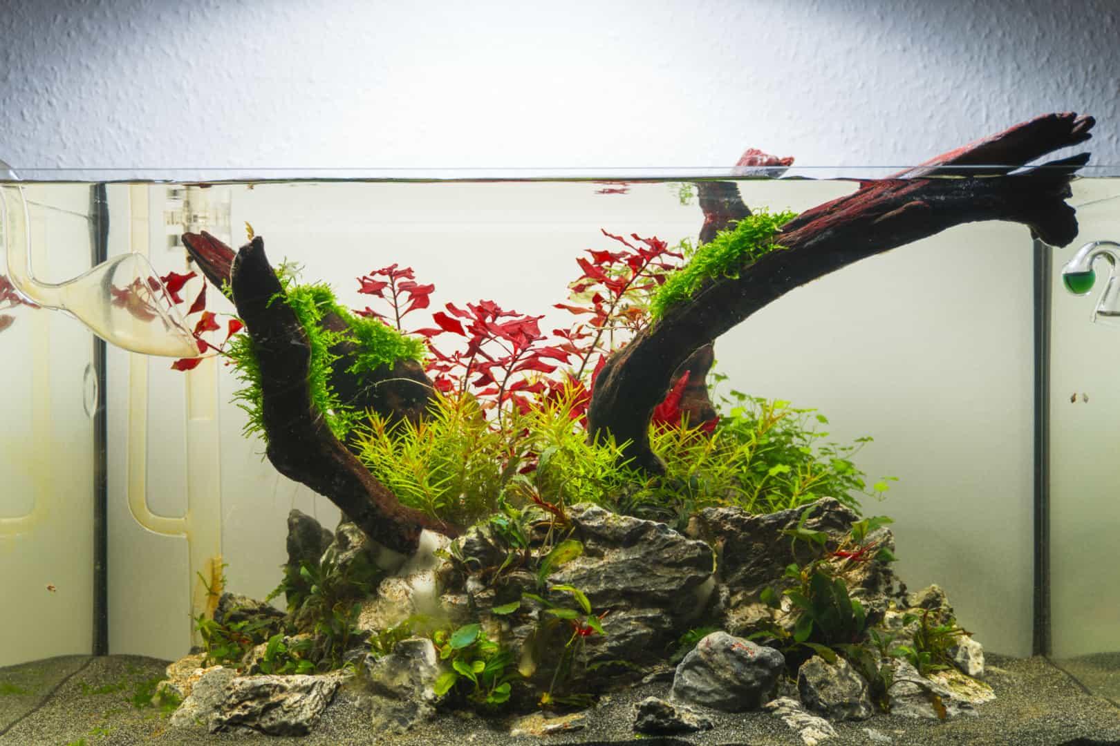 290: Wissensverbreitung und Aufklärung in der modernsten Form - Aquaristik auf TikTok (Daniel Trakowsky) 8