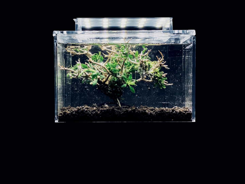 290: Wissensverbreitung und Aufklärung in der modernsten Form - Aquaristik auf TikTok (Daniel Trakowsky) 12