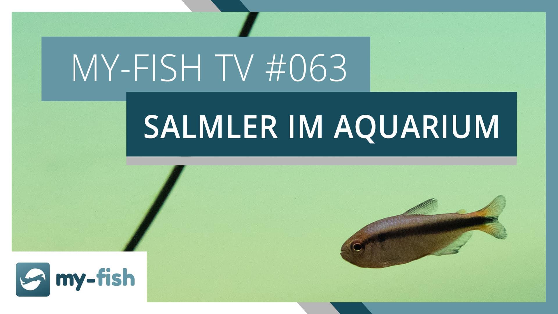 my-fish TV: Die Fischgruppe der Salmler erklärt