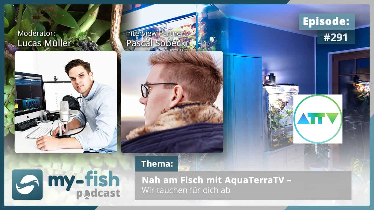 Podcast Episode #291: Nah am Fisch mit AquaTerraTV – Wir tauchen für dich ab (Pascal Sobeck)