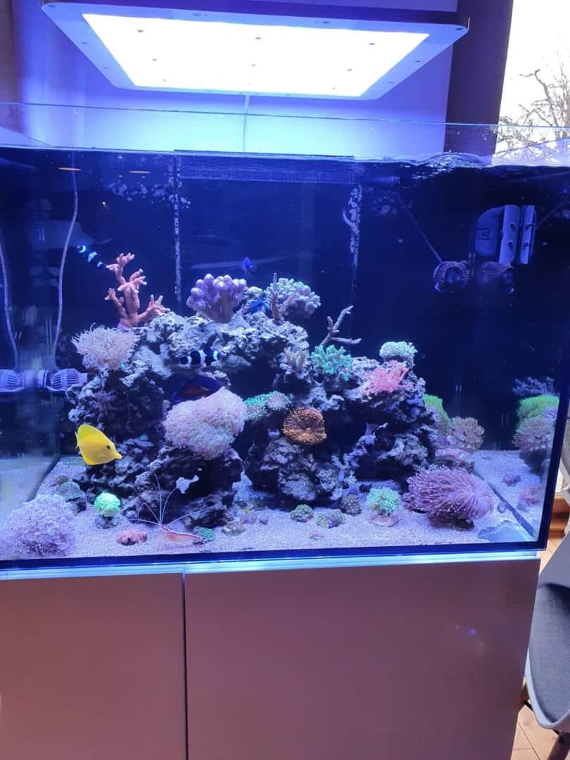 295: Die Aquarienlaufbahn - Ein Aquarianer aus Leipzig erzählt (Conrad Neubert) 7