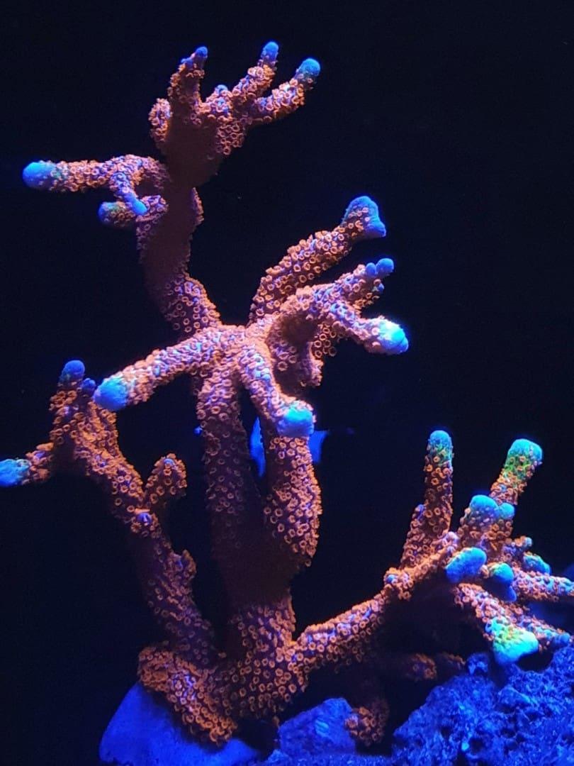 295: Die Aquarienlaufbahn - Ein Aquarianer aus Leipzig erzählt (Conrad Neubert) 16