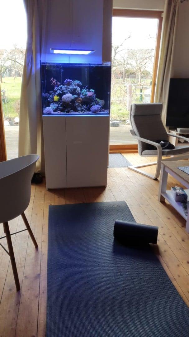 295: Die Aquarienlaufbahn - Ein Aquarianer aus Leipzig erzählt (Conrad Neubert) 11