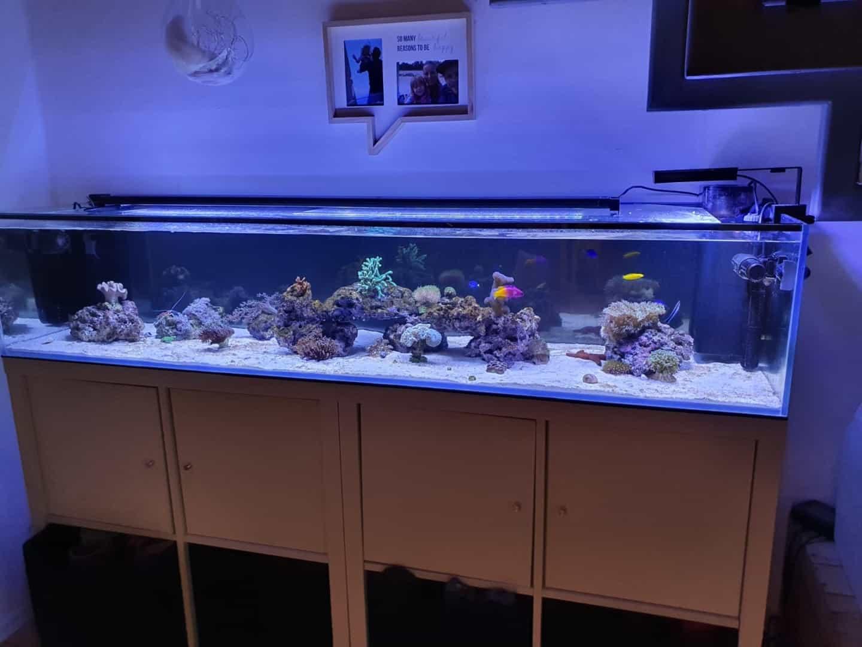 295: Die Aquarienlaufbahn - Ein Aquarianer aus Leipzig erzählt (Conrad Neubert) 12