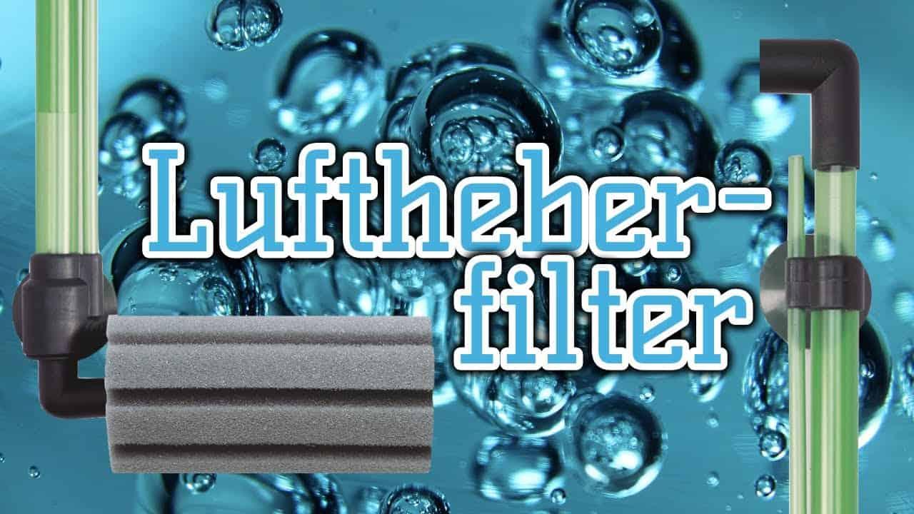 AQUaddicted! - Video Tipp: Der Luftheberfilter