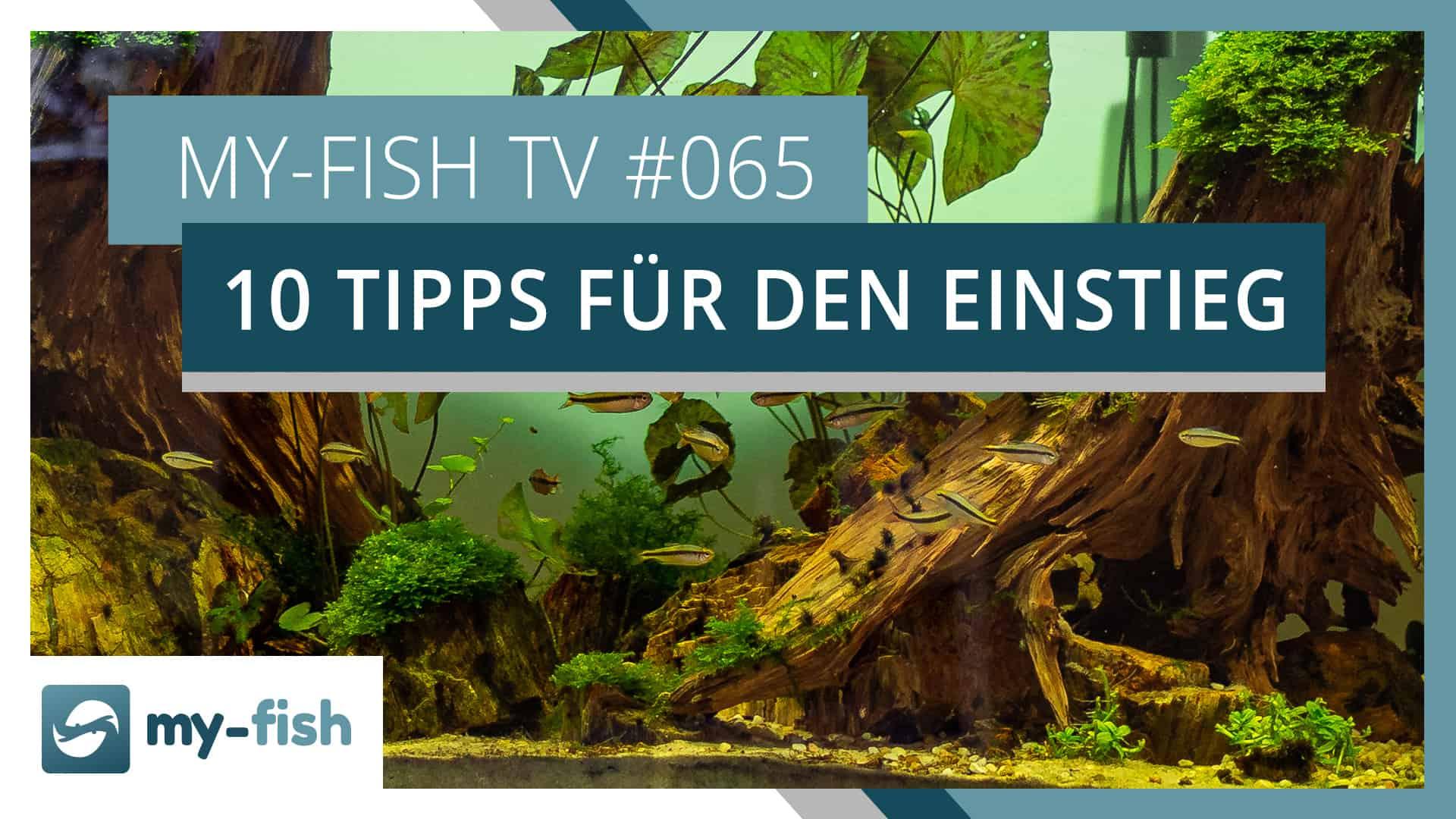 my-fish TV: 10 Tipps zum erfolgreichen Start in die Aquaristik
