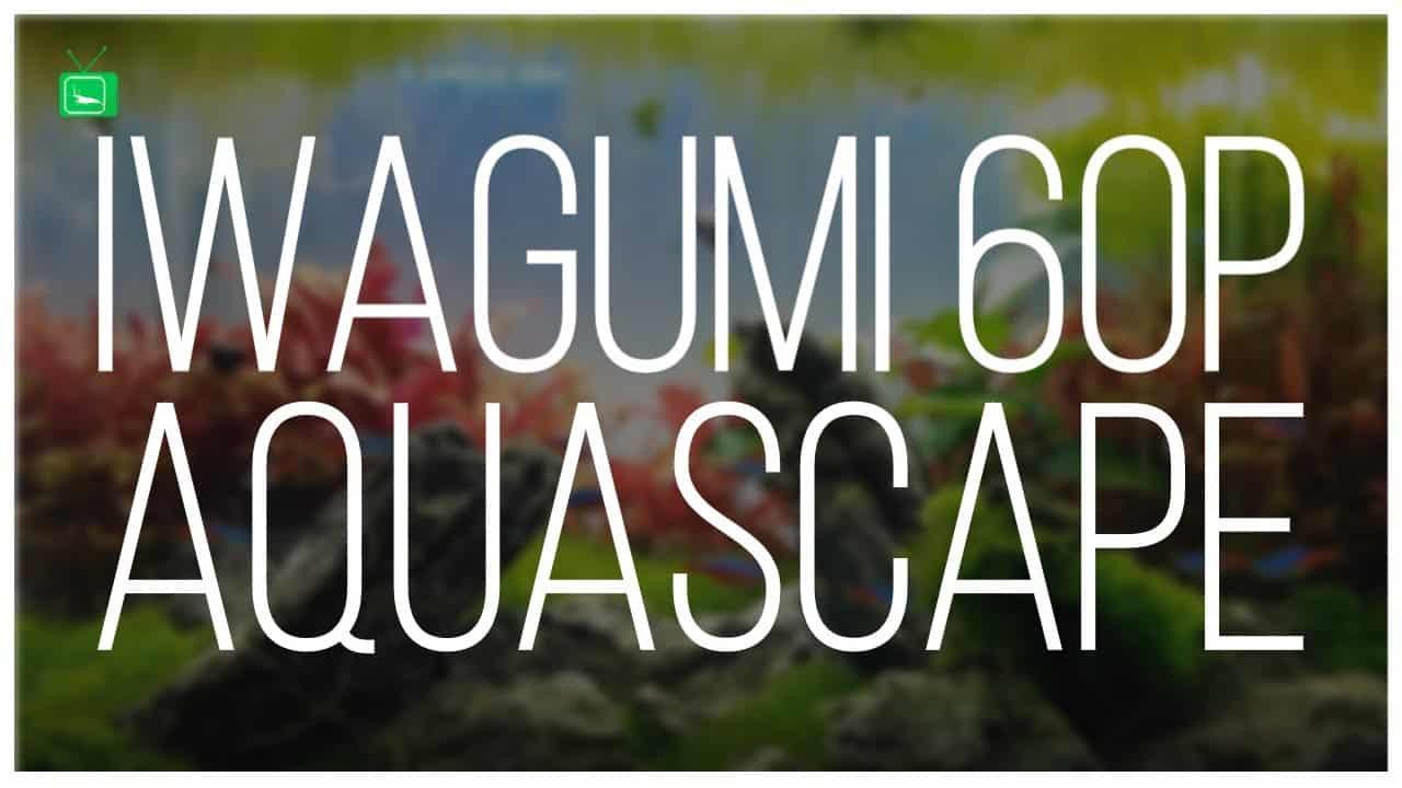 GarnelenTv Video Tipp: IWAGUMI 60P Aquarium | Aquarien Bewerten