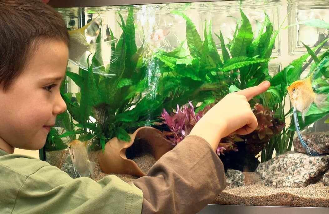 Fische alleine zu Hause: Futterautomaten für Aquarien