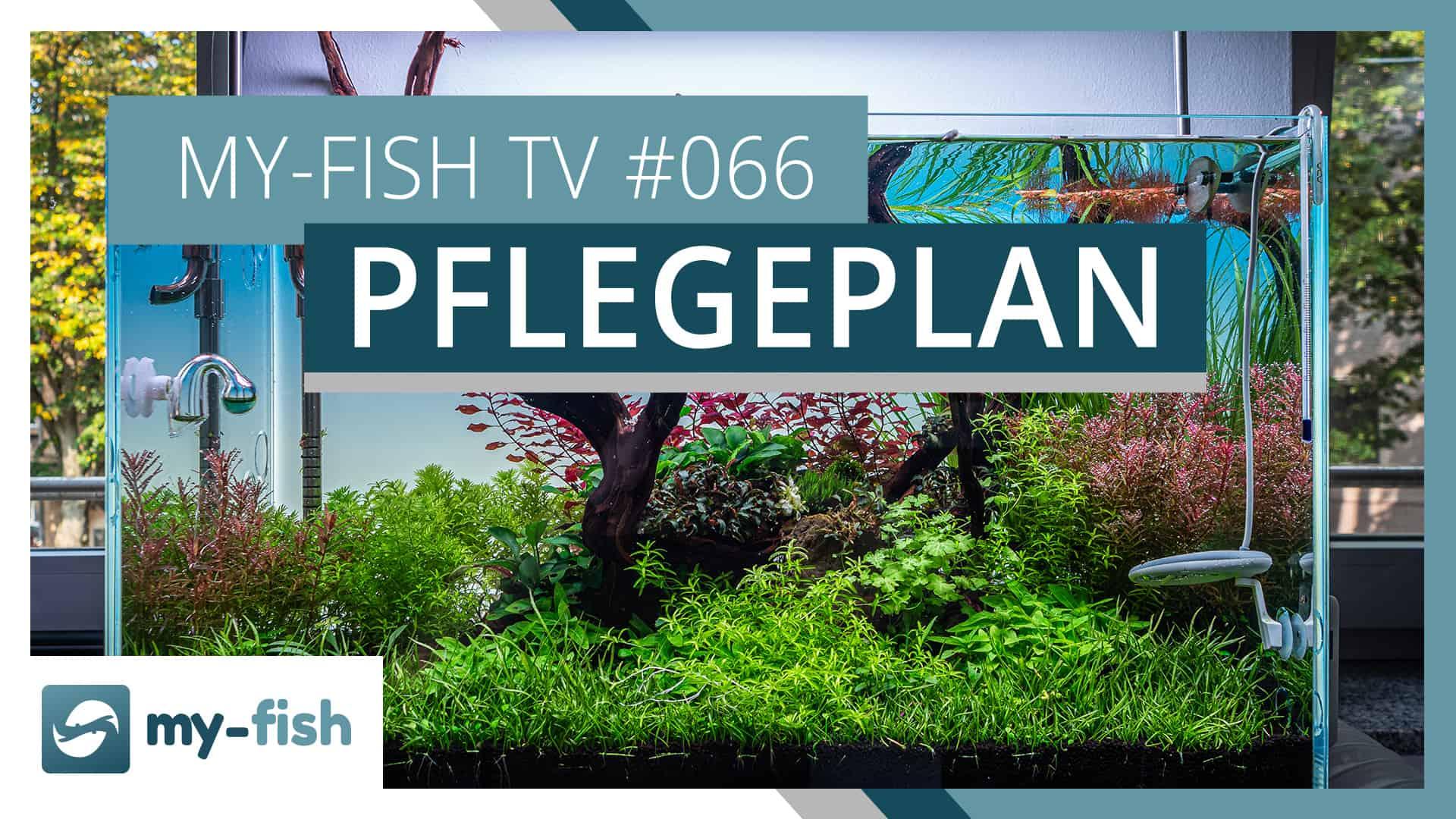 my-fish TV: Allgemeiner Pflegeplan für dein Aquarium
